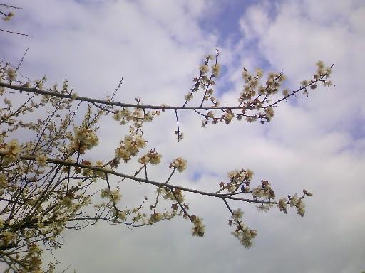 春先 001.jpg