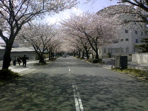 桜04 006.jpg