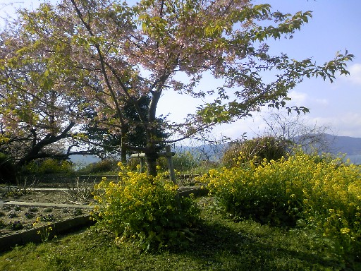 桜 006.jpg